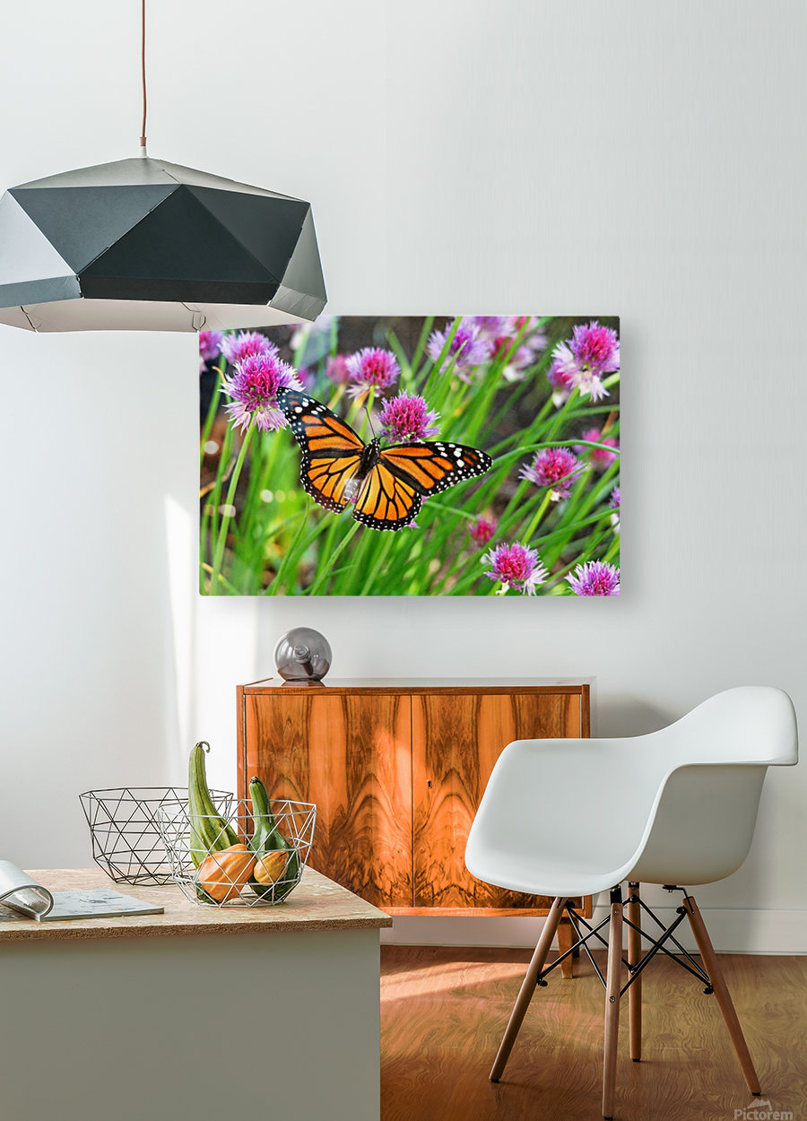 Monarch And Chives  HD Metal print with Floating Frame on Back