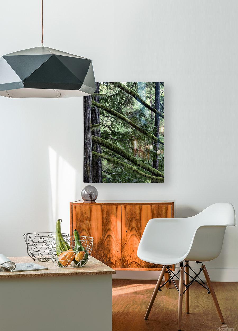 Rainforest  Impression métal HD avec cadre flottant sur le dos
