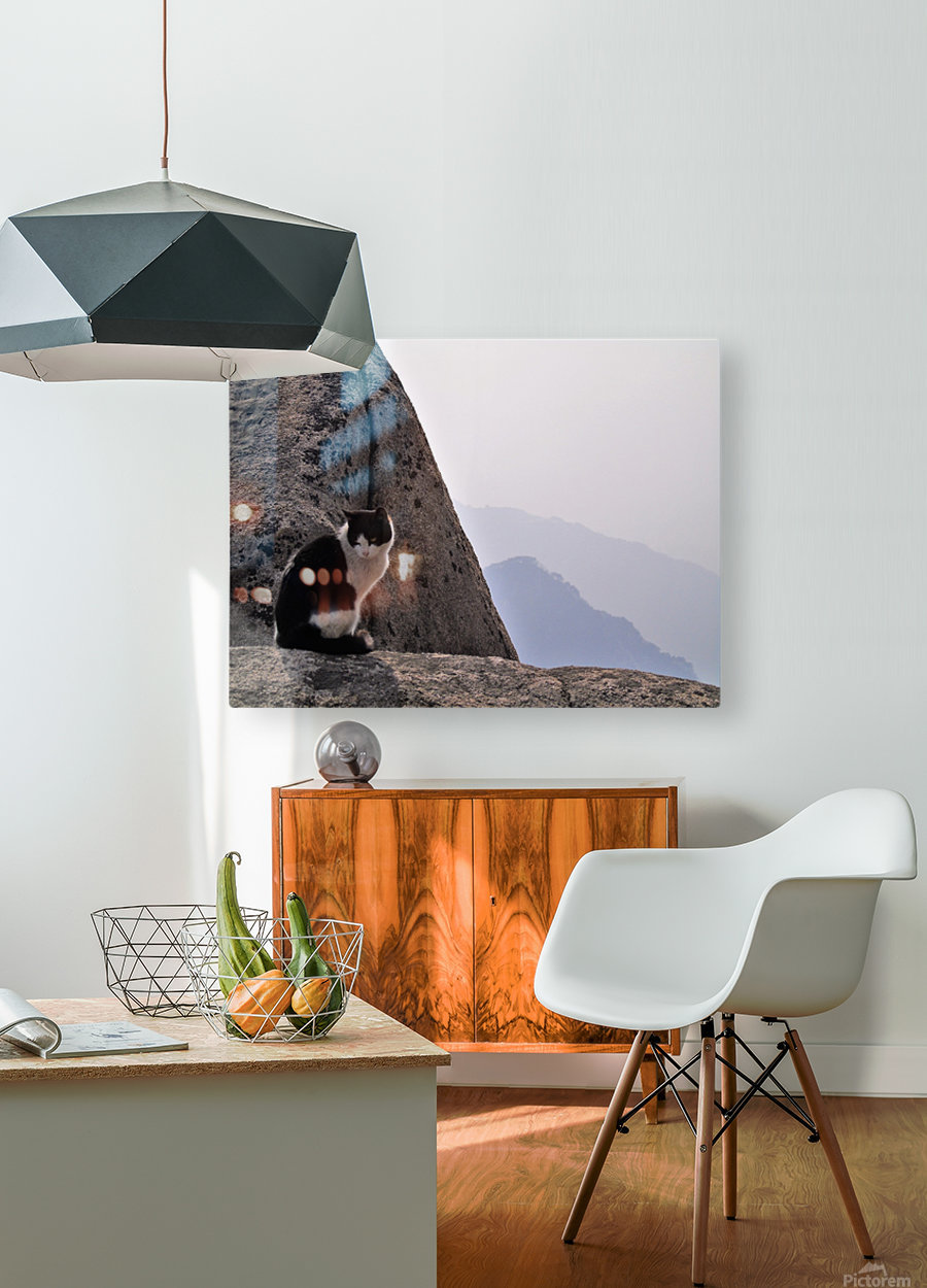 Mountain Cat  HD Metal print with Floating Frame on Back