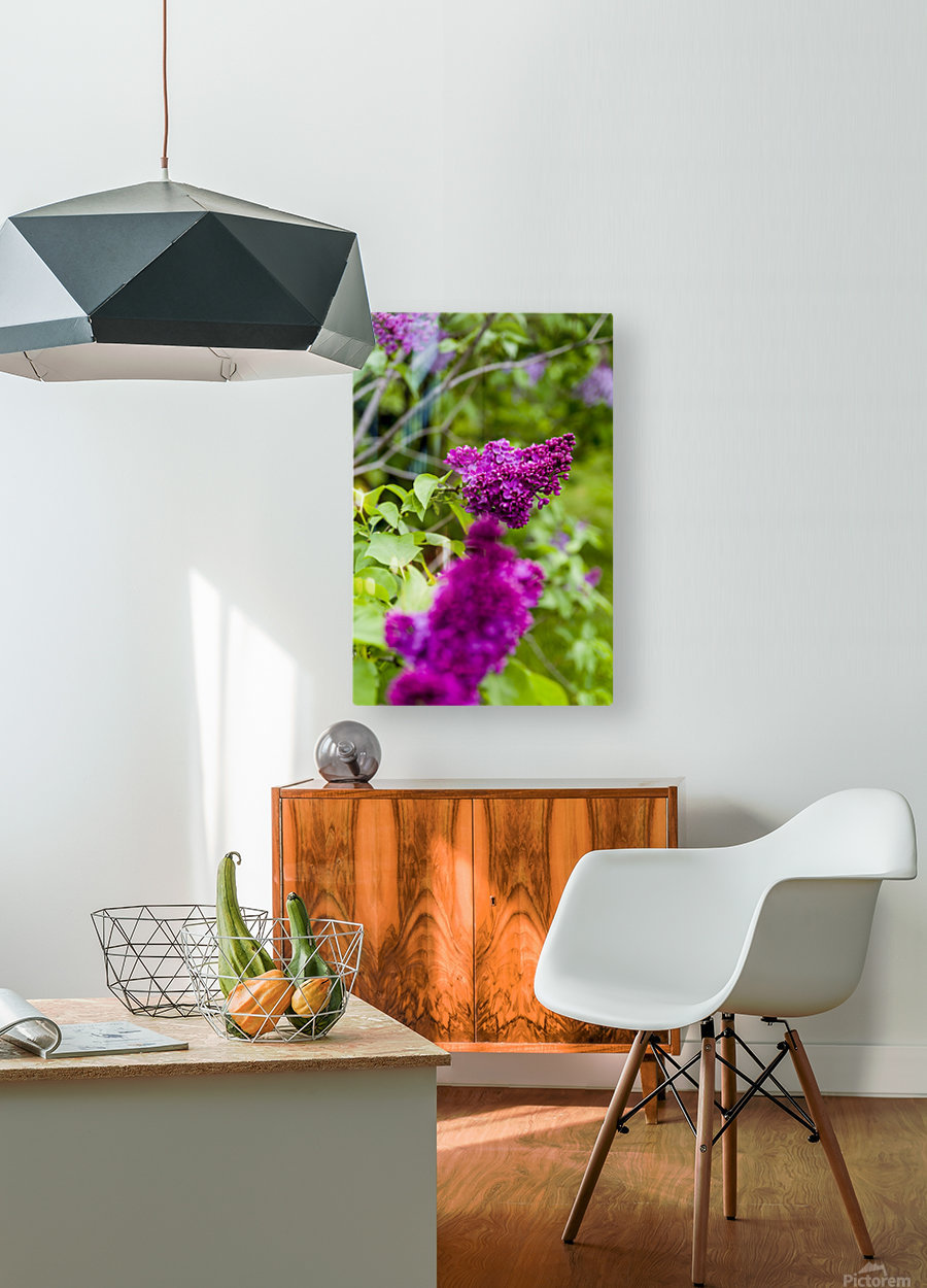 Purple Lilac Blossoms 2  HD Metal print with Floating Frame on Back