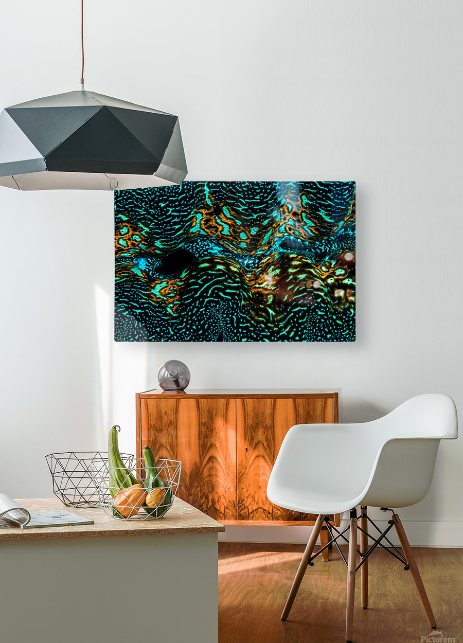 Giant Clam  HD Metal print with Floating Frame on Back