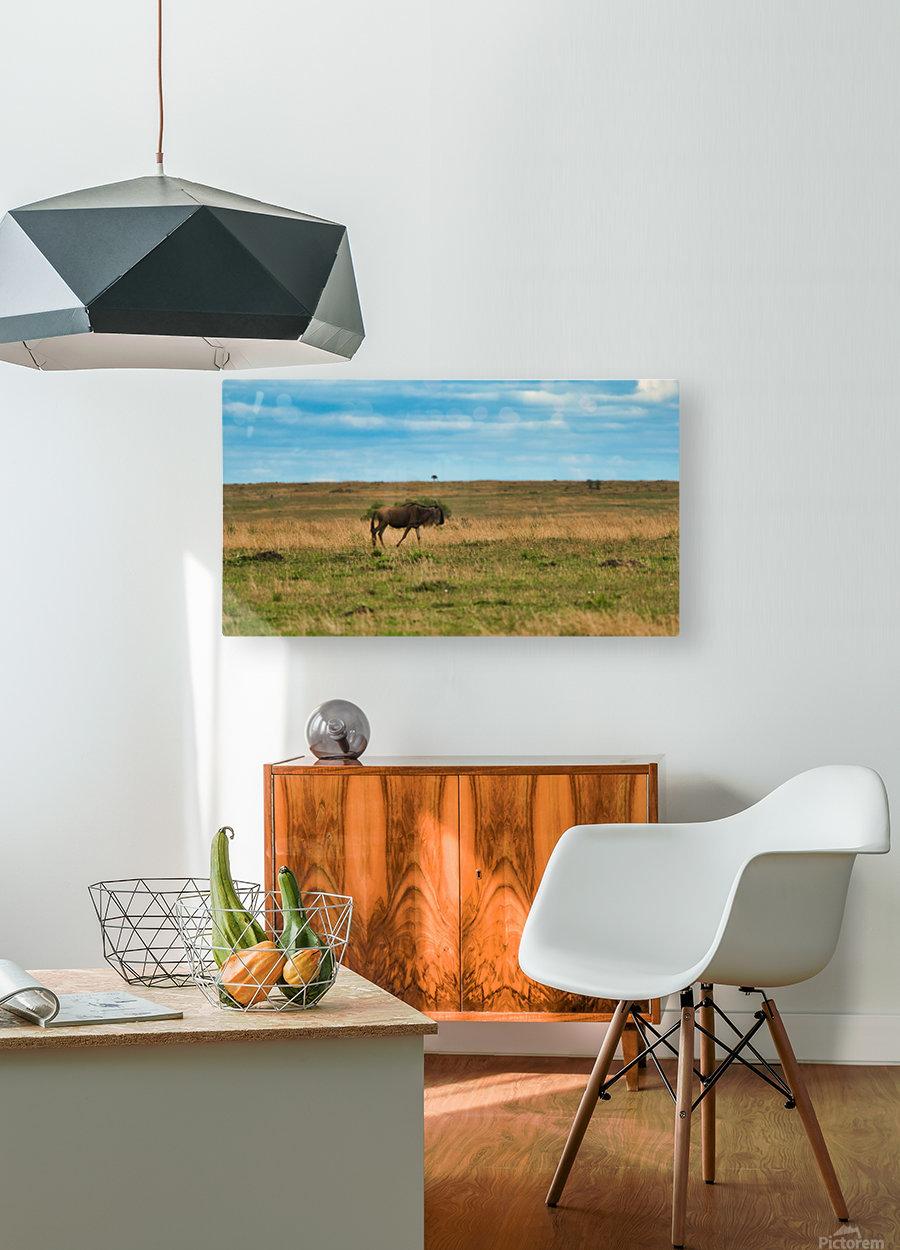 Cheetah stalking is prey  HD Metal print with Floating Frame on Back