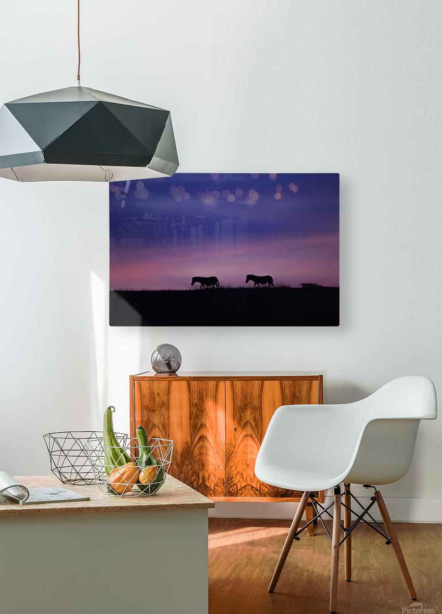Zebra Sunrise  HD Metal print with Floating Frame on Back