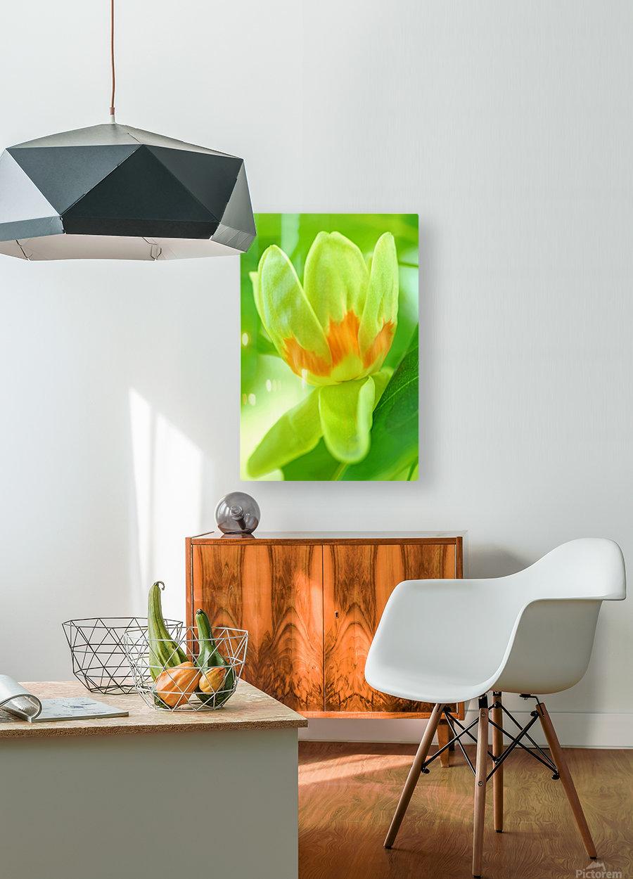 Tulip Poplar Flower  HD Metal print with Floating Frame on Back