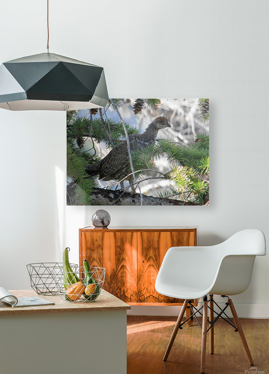 ruffed  HD Metal print with Floating Frame on Back