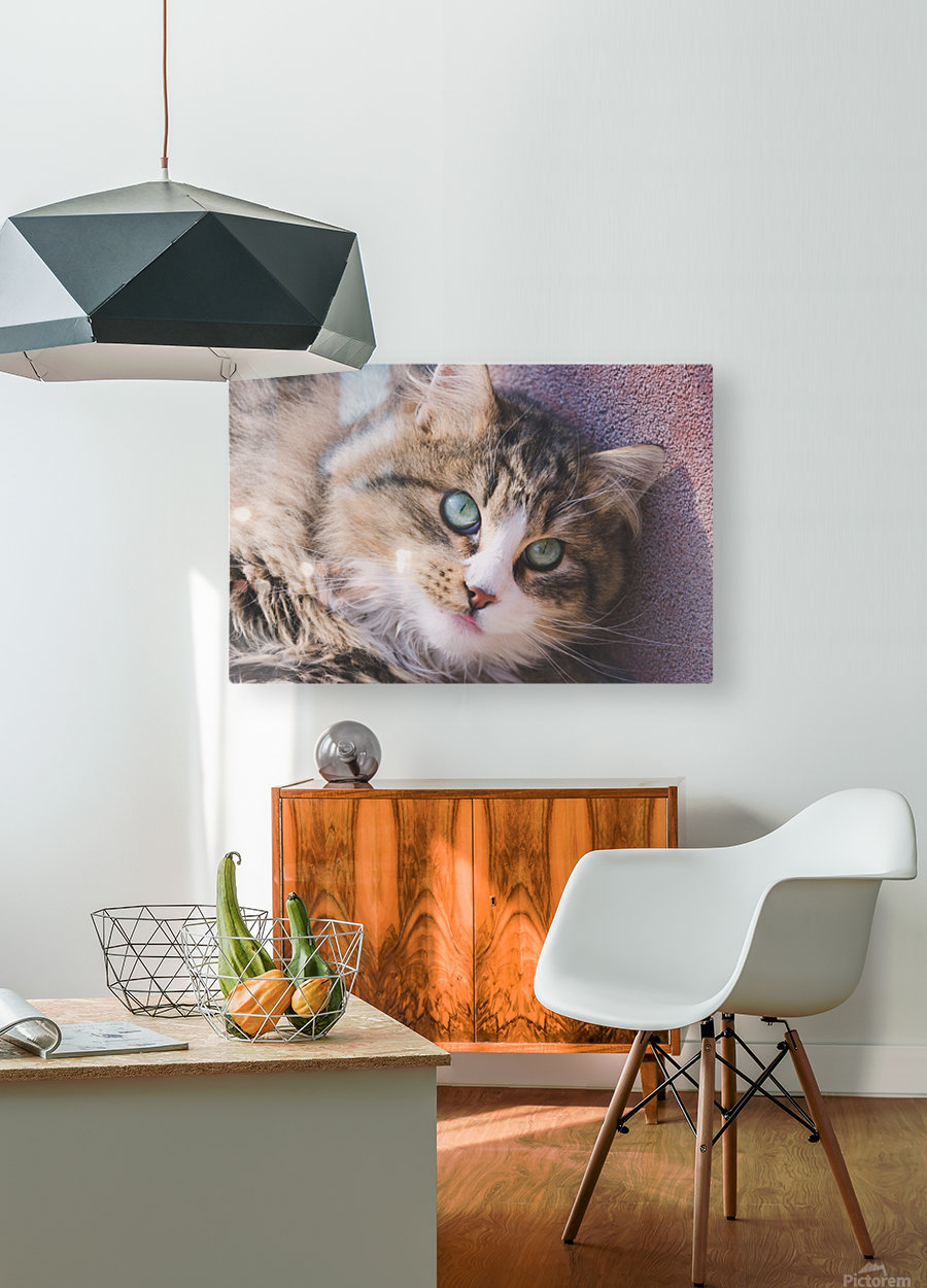 March Cat  HD Metal print with Floating Frame on Back