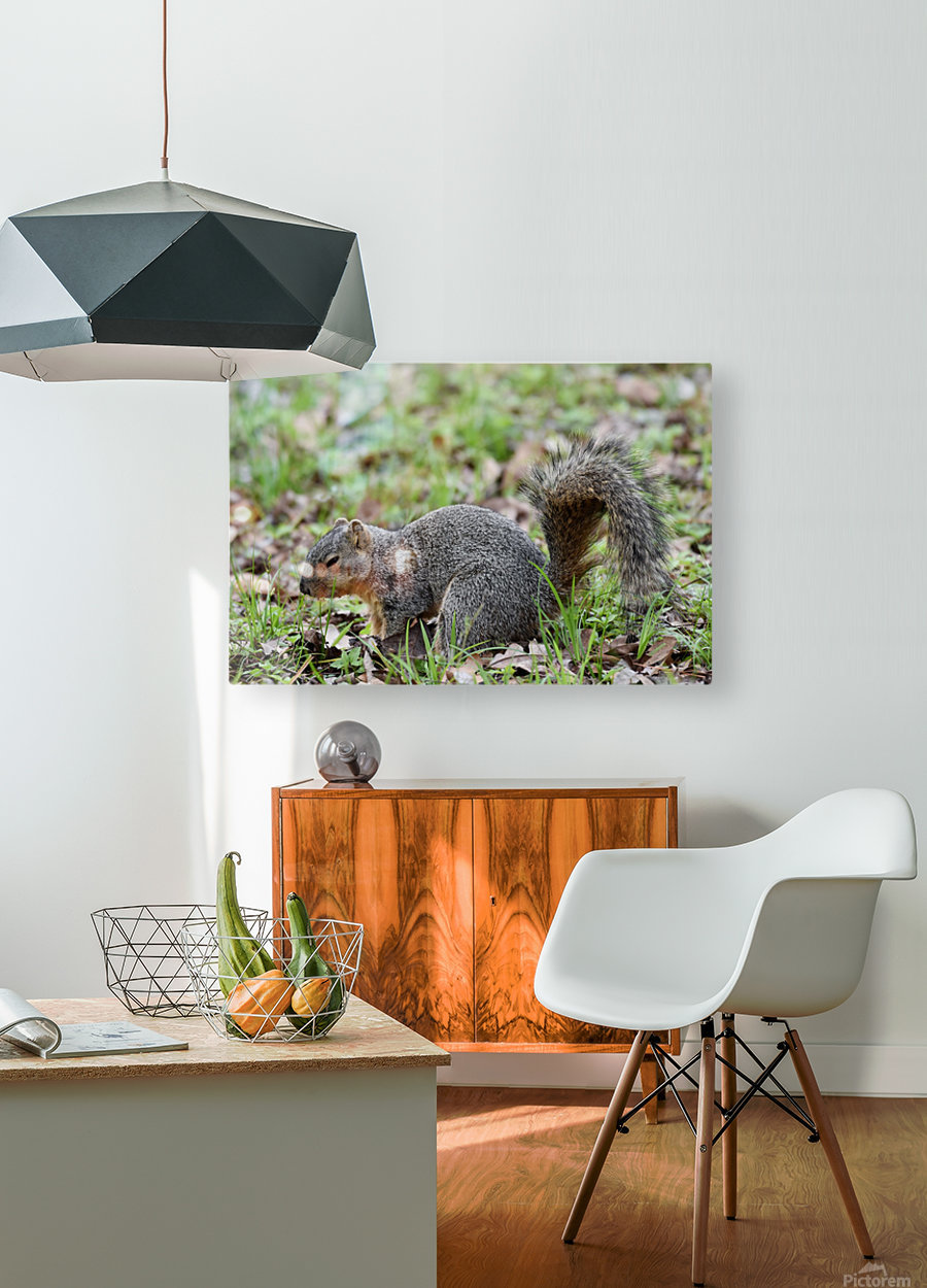 Squirrel  HD Metal print with Floating Frame on Back