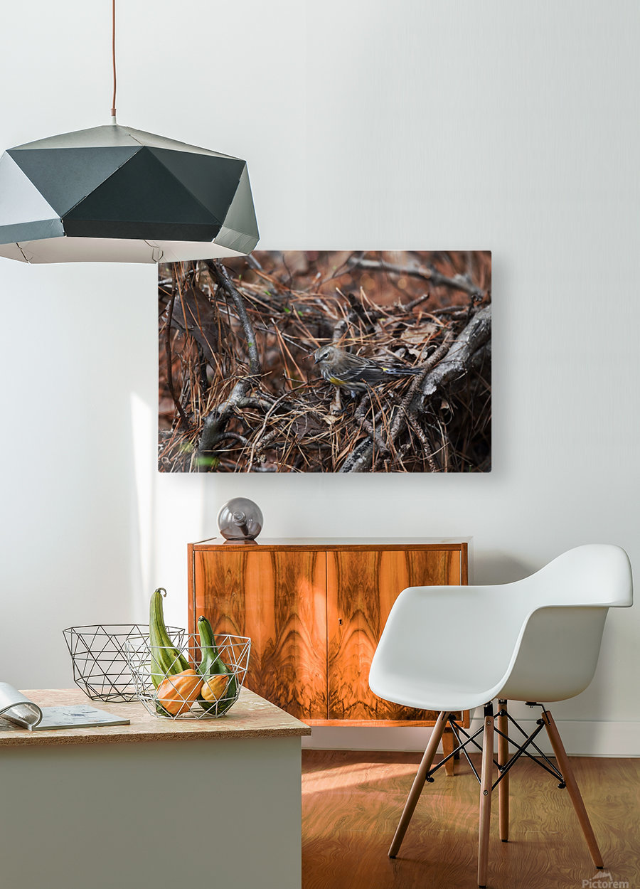 Yellow-rumped warbler  HD Metal print with Floating Frame on Back