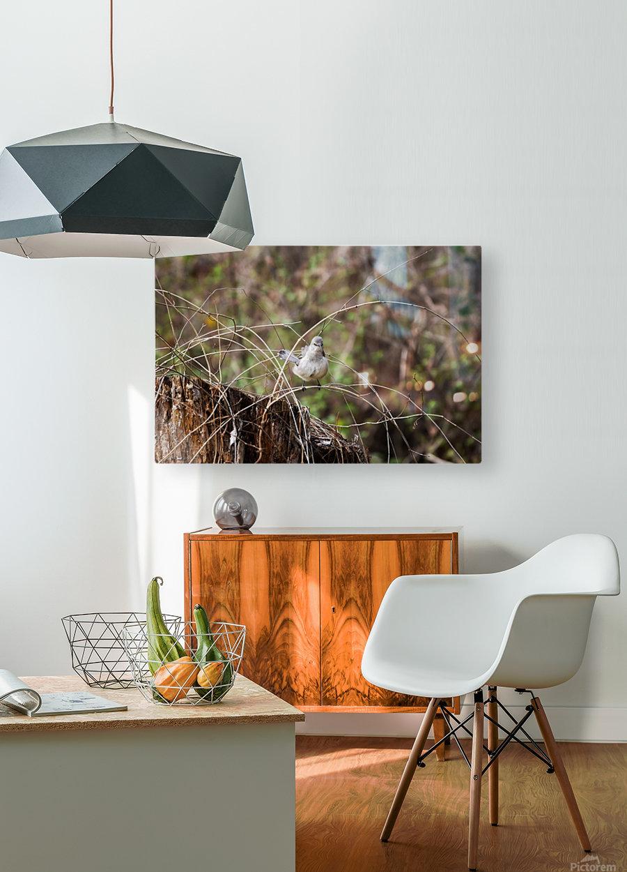Angry Mockingbird 3  HD Metal print with Floating Frame on Back