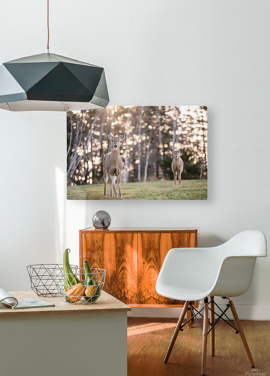 In the field  HD Metal print with Floating Frame on Back