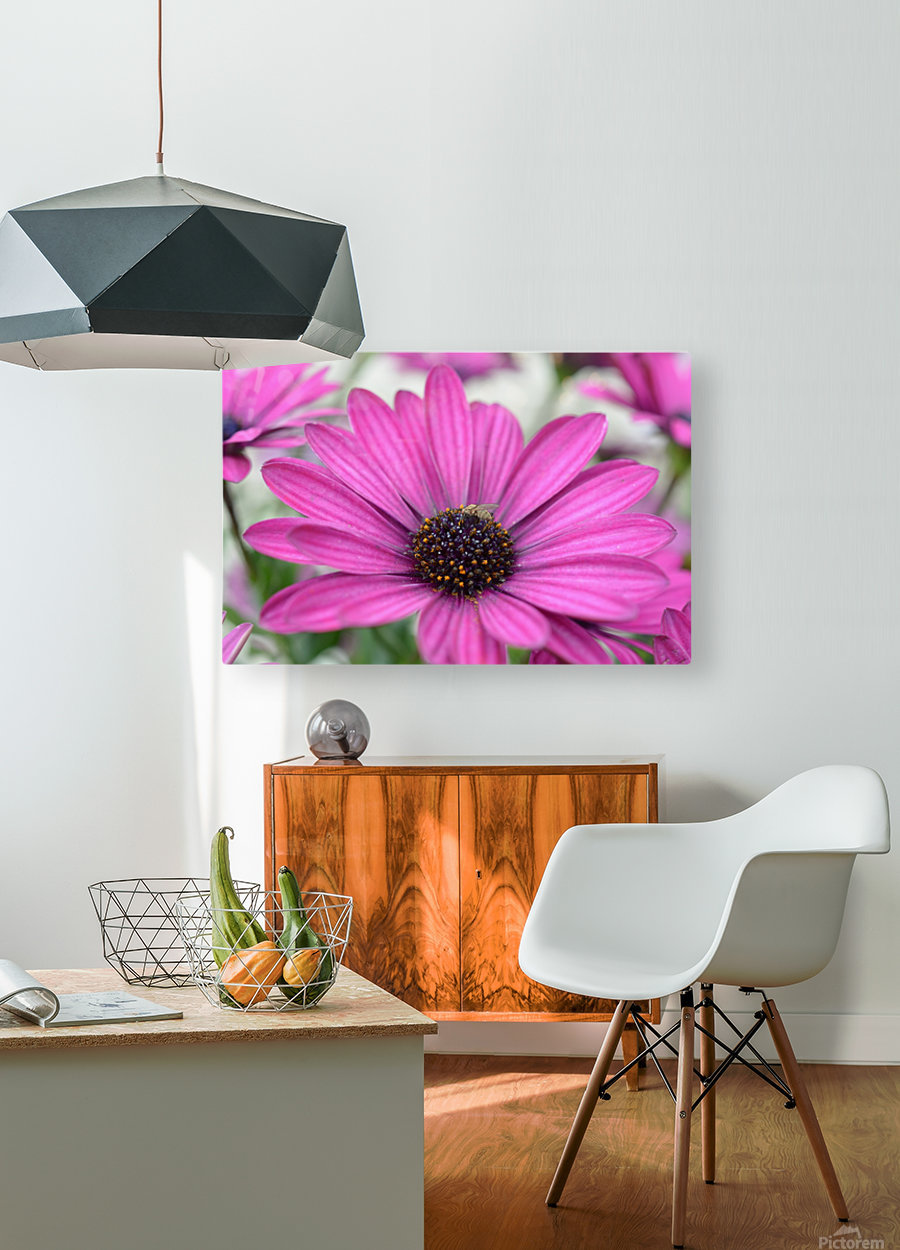 Purple Flower Photograph  HD Metal print with Floating Frame on Back