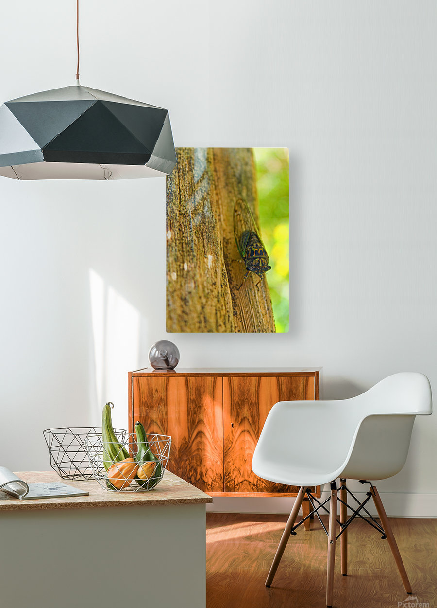 Cicada  HD Metal print with Floating Frame on Back
