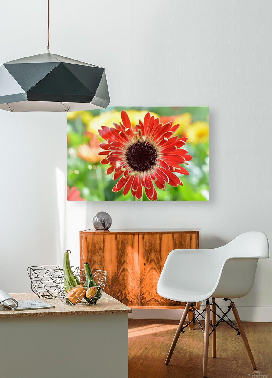 Red Flower Photograph  HD Metal print with Floating Frame on Back