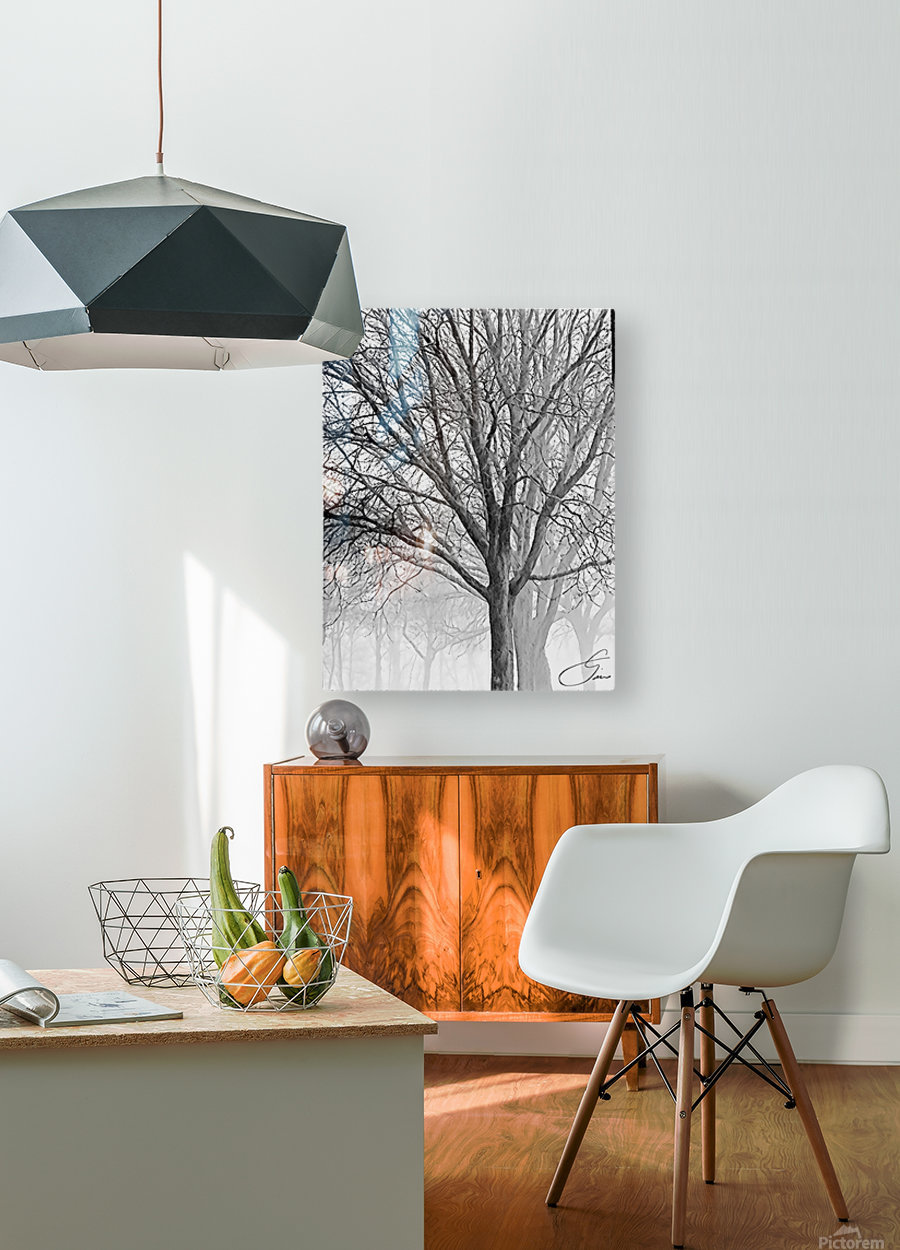 Trees in the Mist  HD Metal print with Floating Frame on Back
