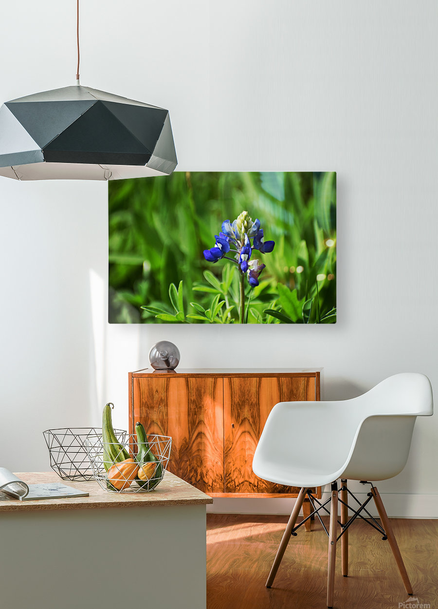 Texas Blue Bonnets  HD Metal print with Floating Frame on Back