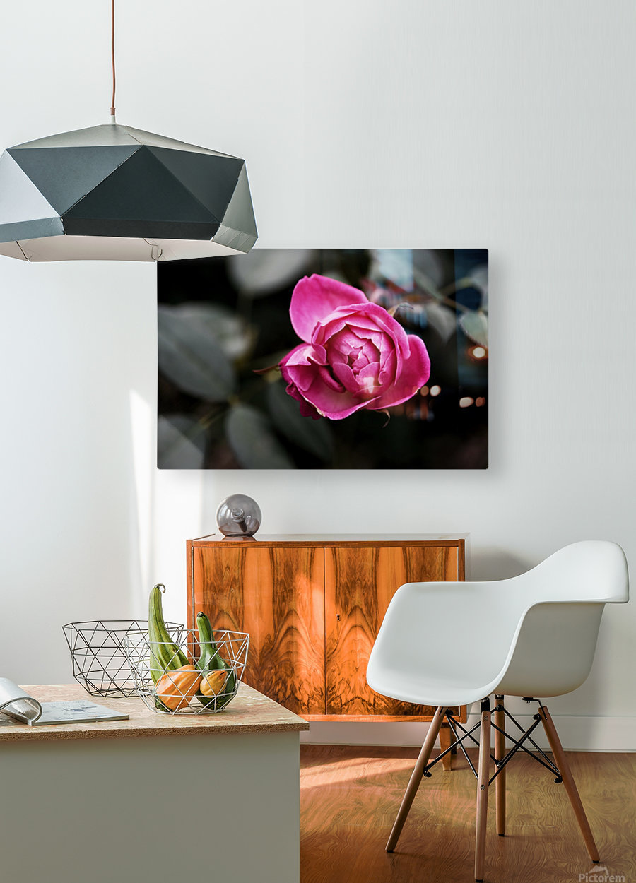 Single Rose  HD Metal print with Floating Frame on Back