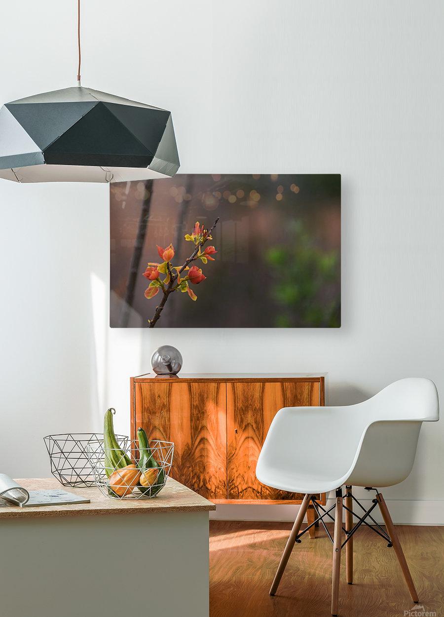 orange blossoms  HD Metal print with Floating Frame on Back