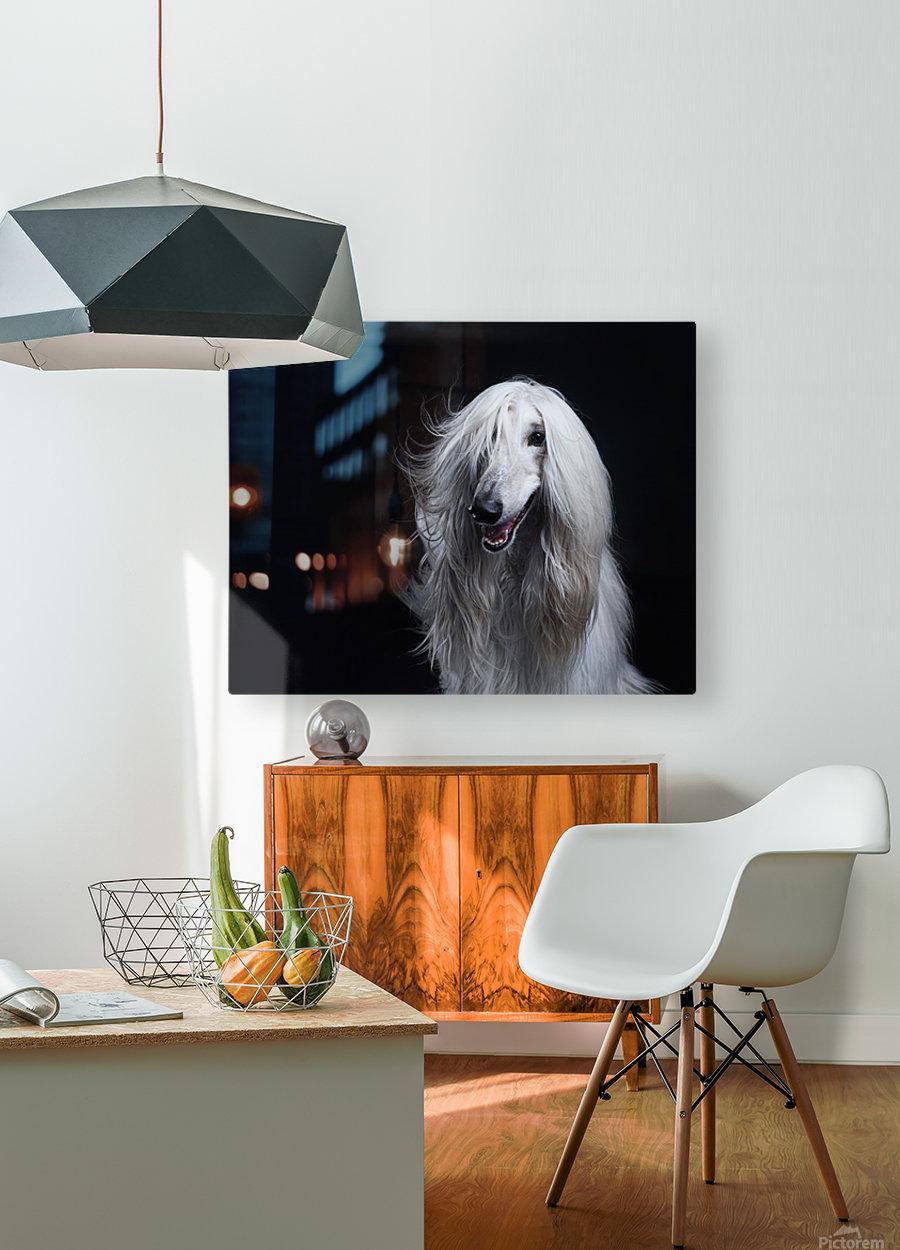 Afghan Hound Portrait  HD Metal print with Floating Frame on Back