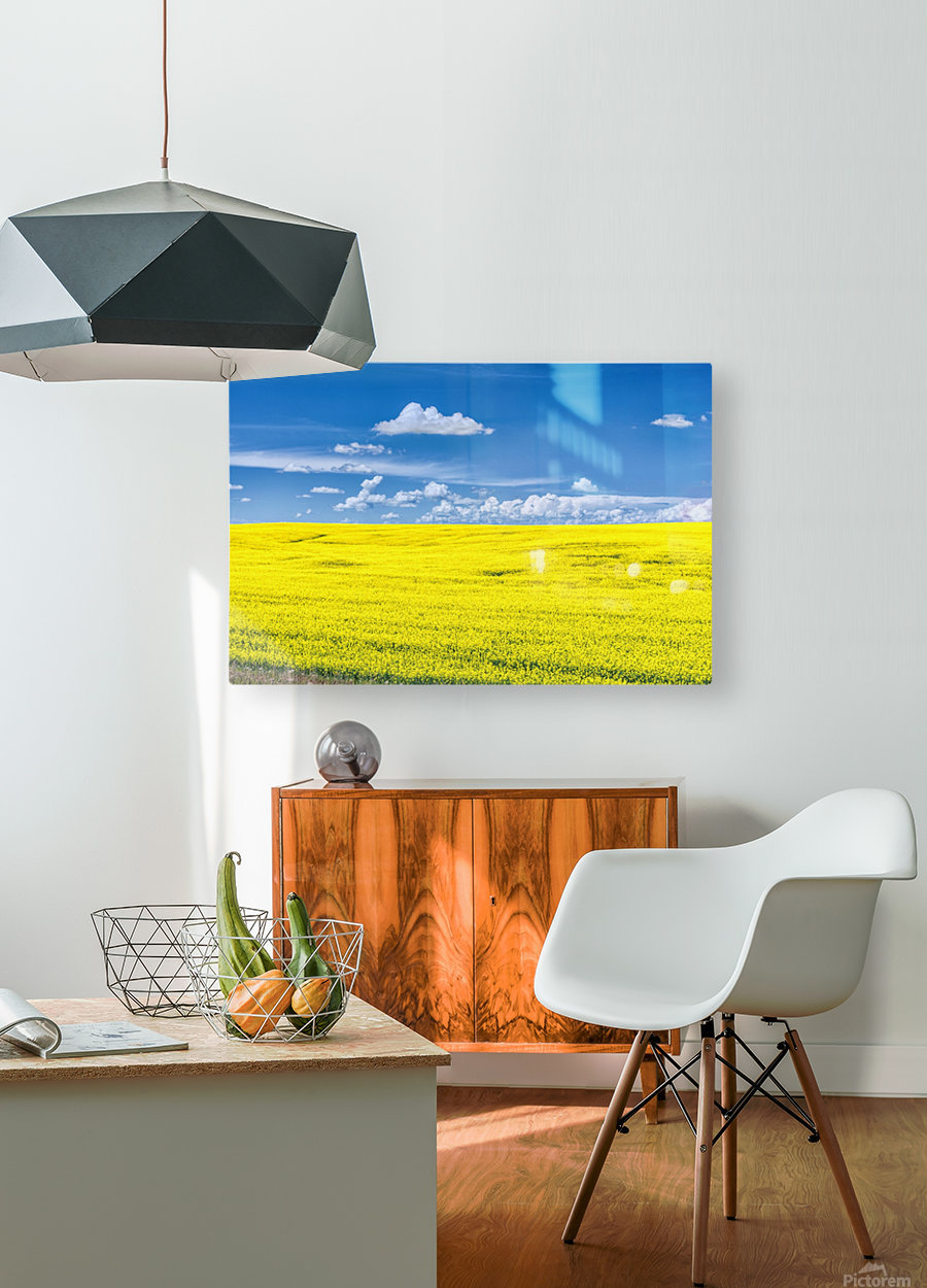 Canola Field   HD Metal print with Floating Frame on Back