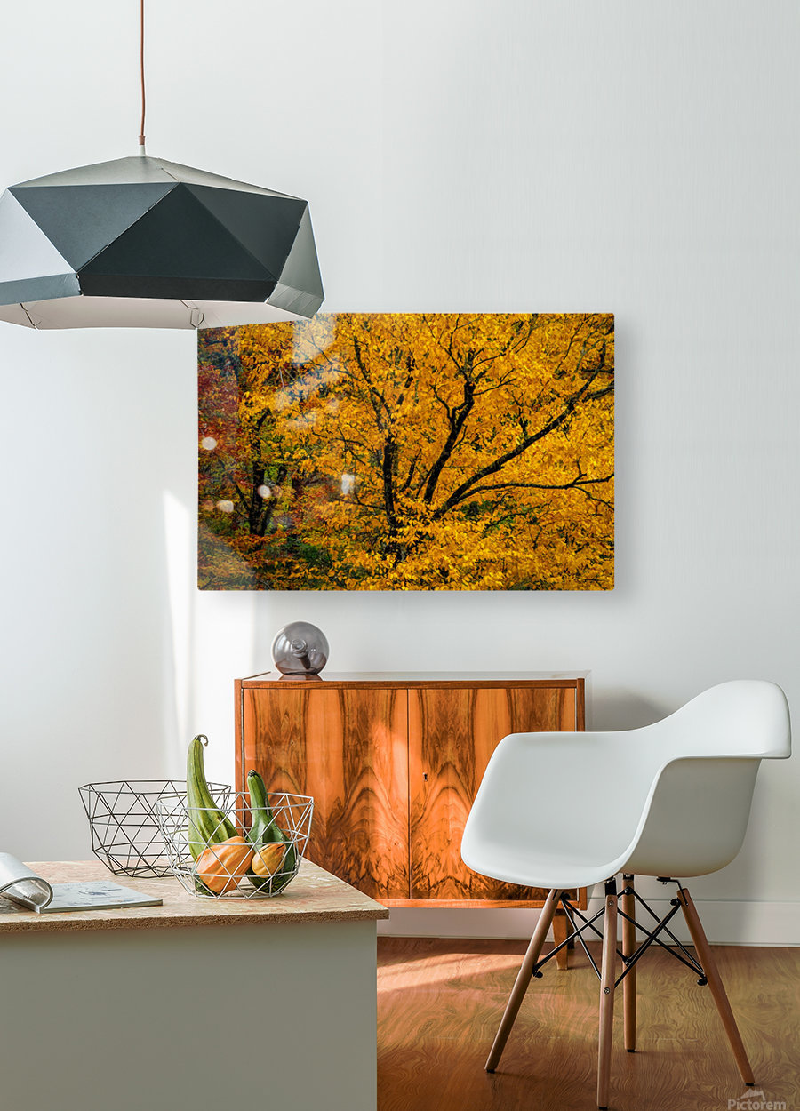 Yellow Tree Leaves  HD Metal print with Floating Frame on Back