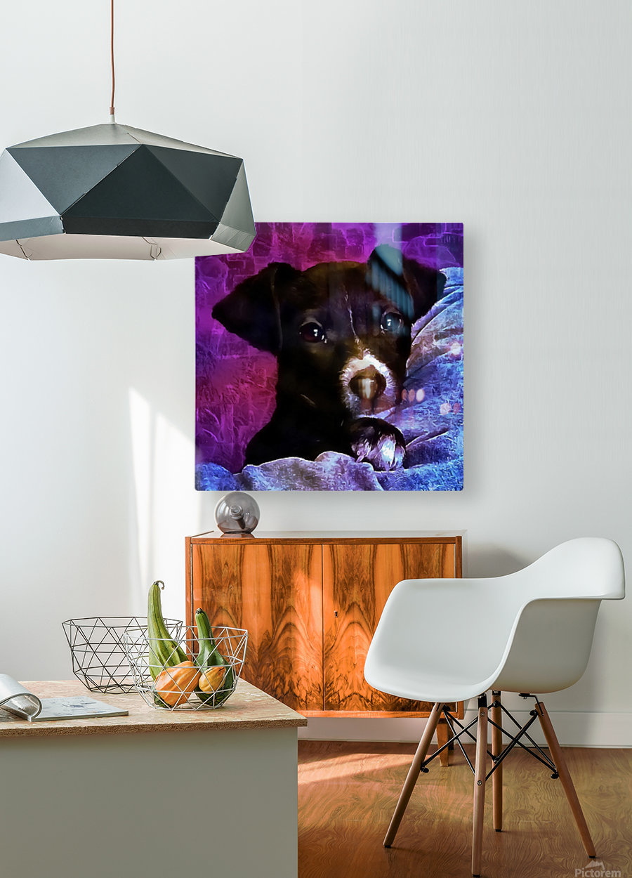 Soft Puppy Snuggles  HD Metal print with Floating Frame on Back