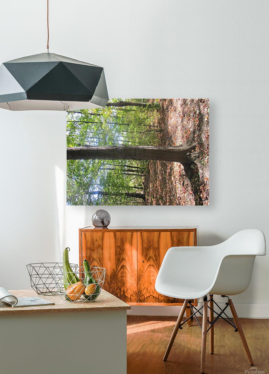 Landscape (60)  HD Metal print with Floating Frame on Back