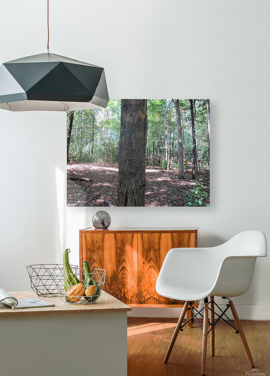 Landscape (166)  HD Metal print with Floating Frame on Back