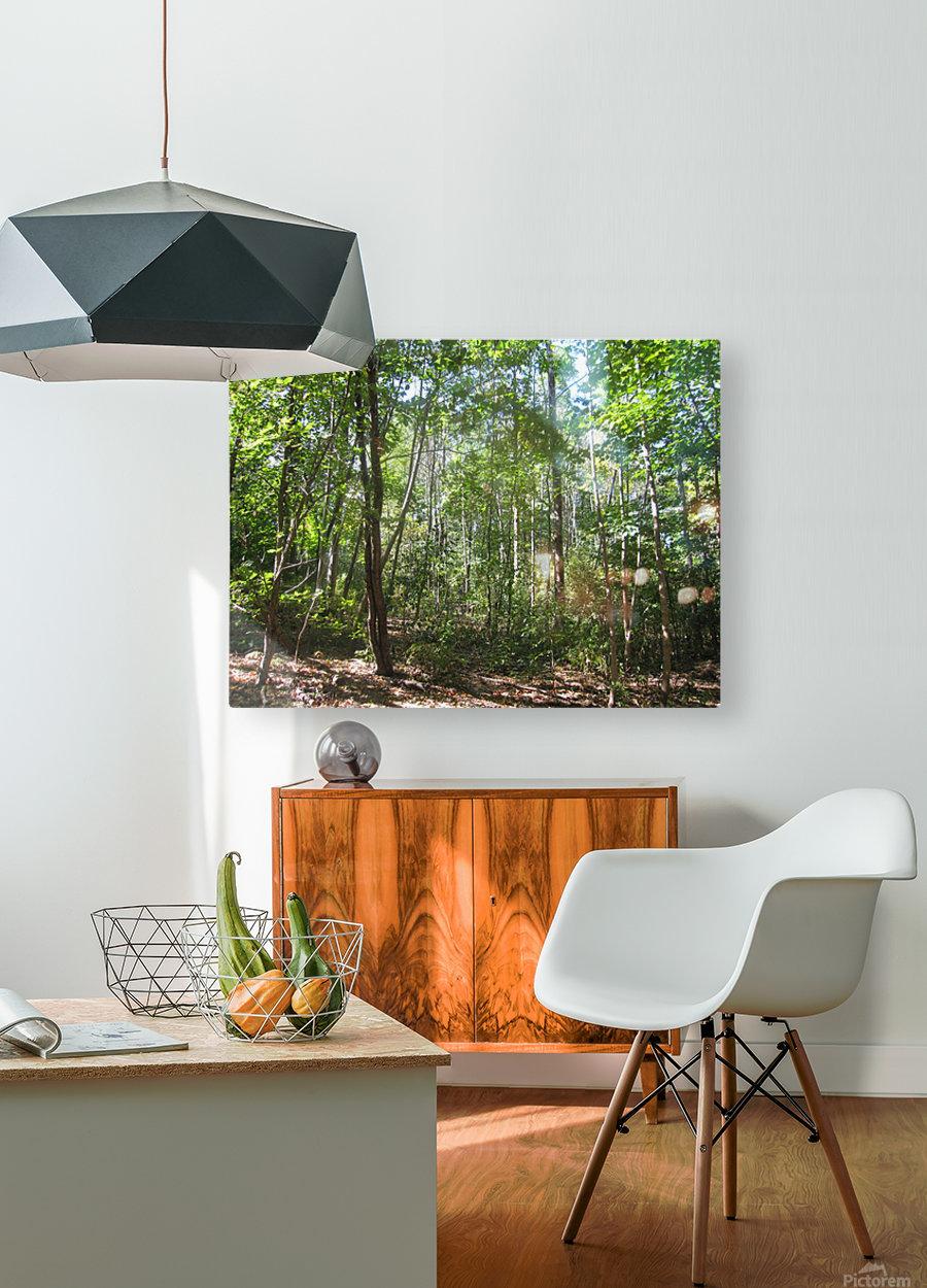 Landscape (176)  HD Metal print with Floating Frame on Back