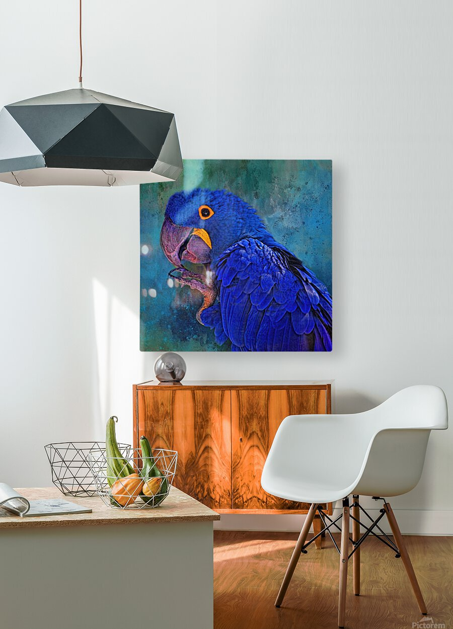 Hyacinth Macaw  HD Metal print with Floating Frame on Back