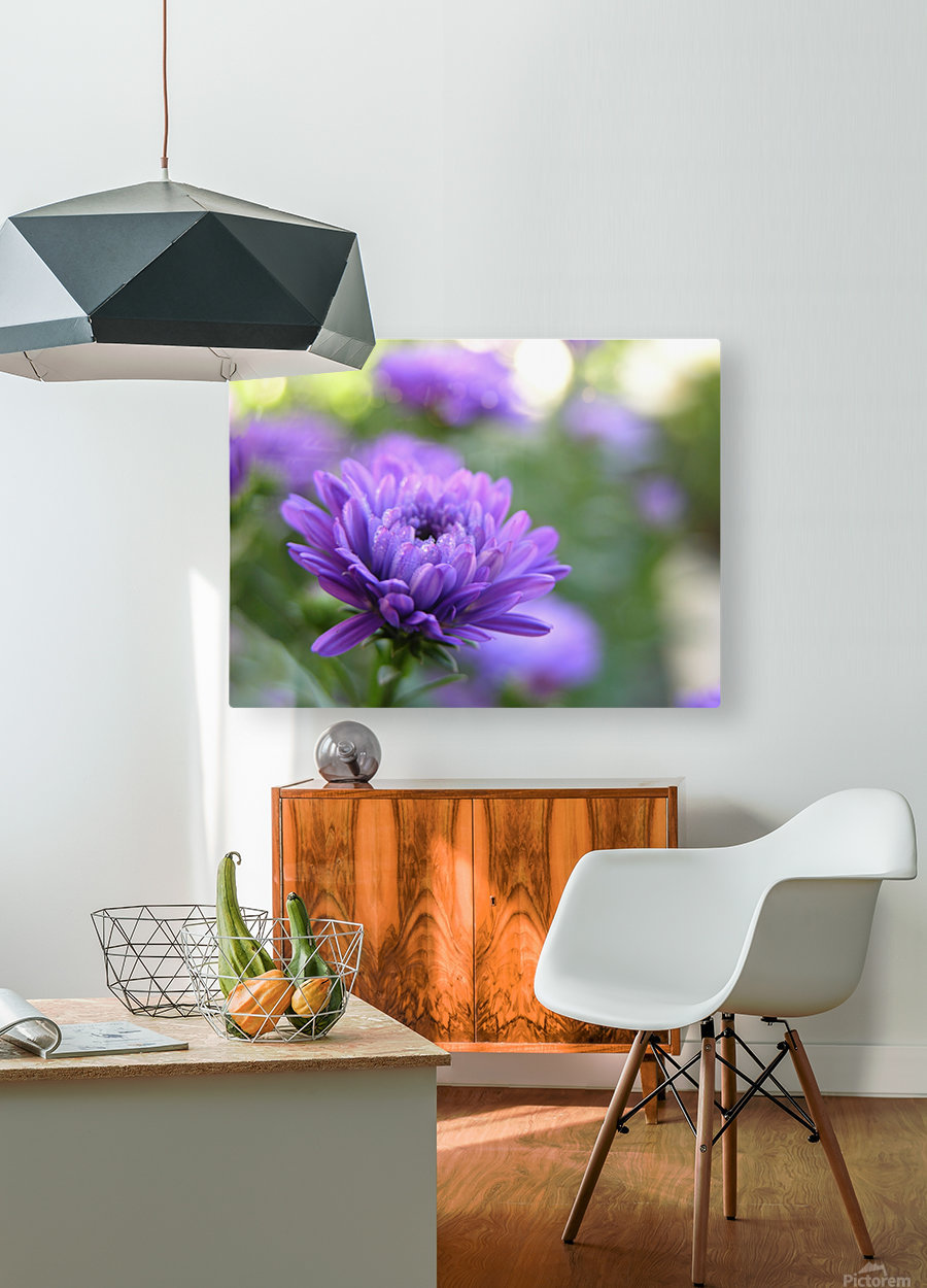 Blue Flower Photograph  HD Metal print with Floating Frame on Back
