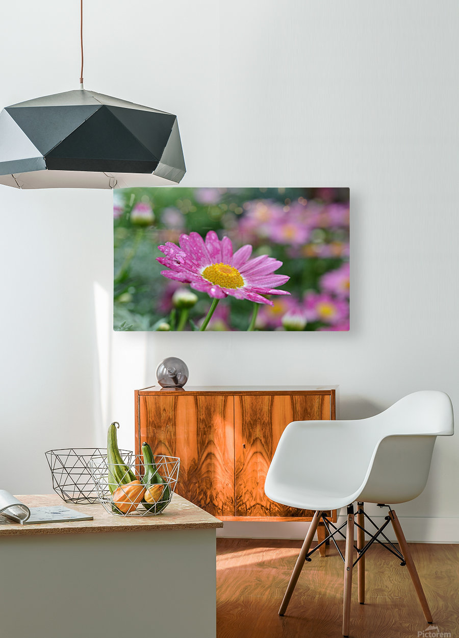 Pink Flower Photograph  HD Metal print with Floating Frame on Back