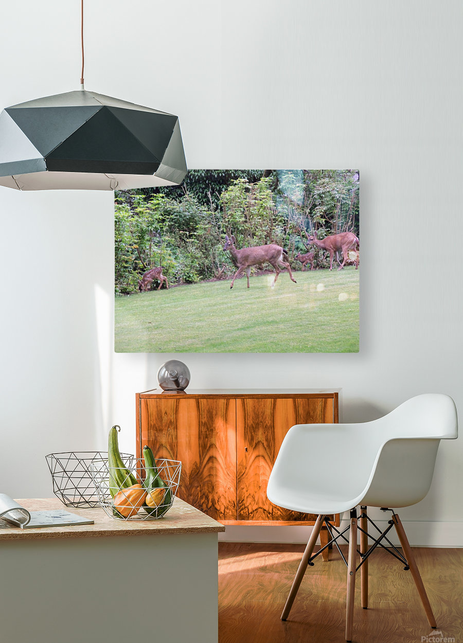 Deer  HD Metal print with Floating Frame on Back