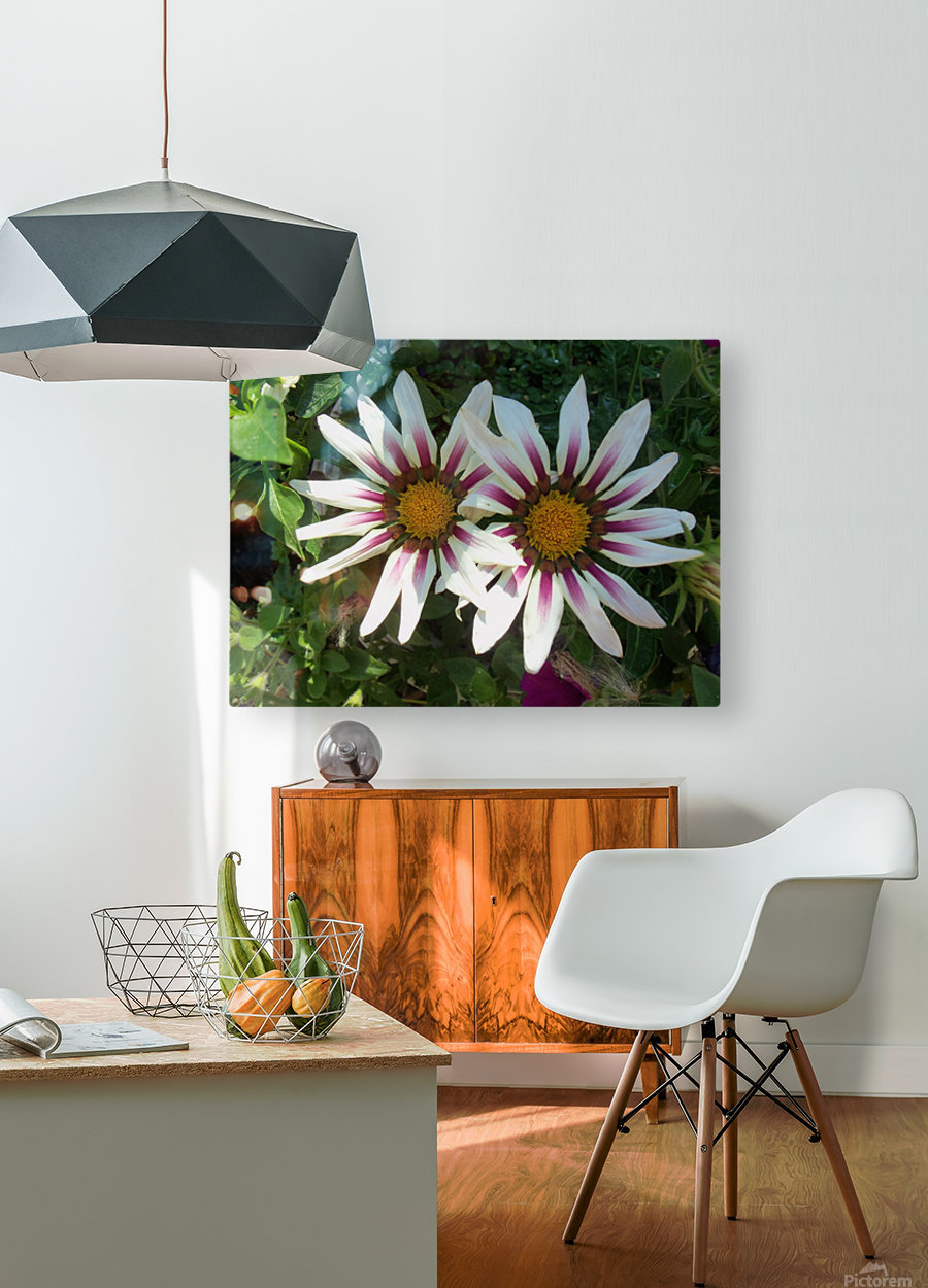 Saskatchewan Flowers  HD Metal print with Floating Frame on Back