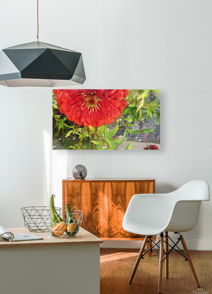 Flower (7)  HD Metal print with Floating Frame on Back