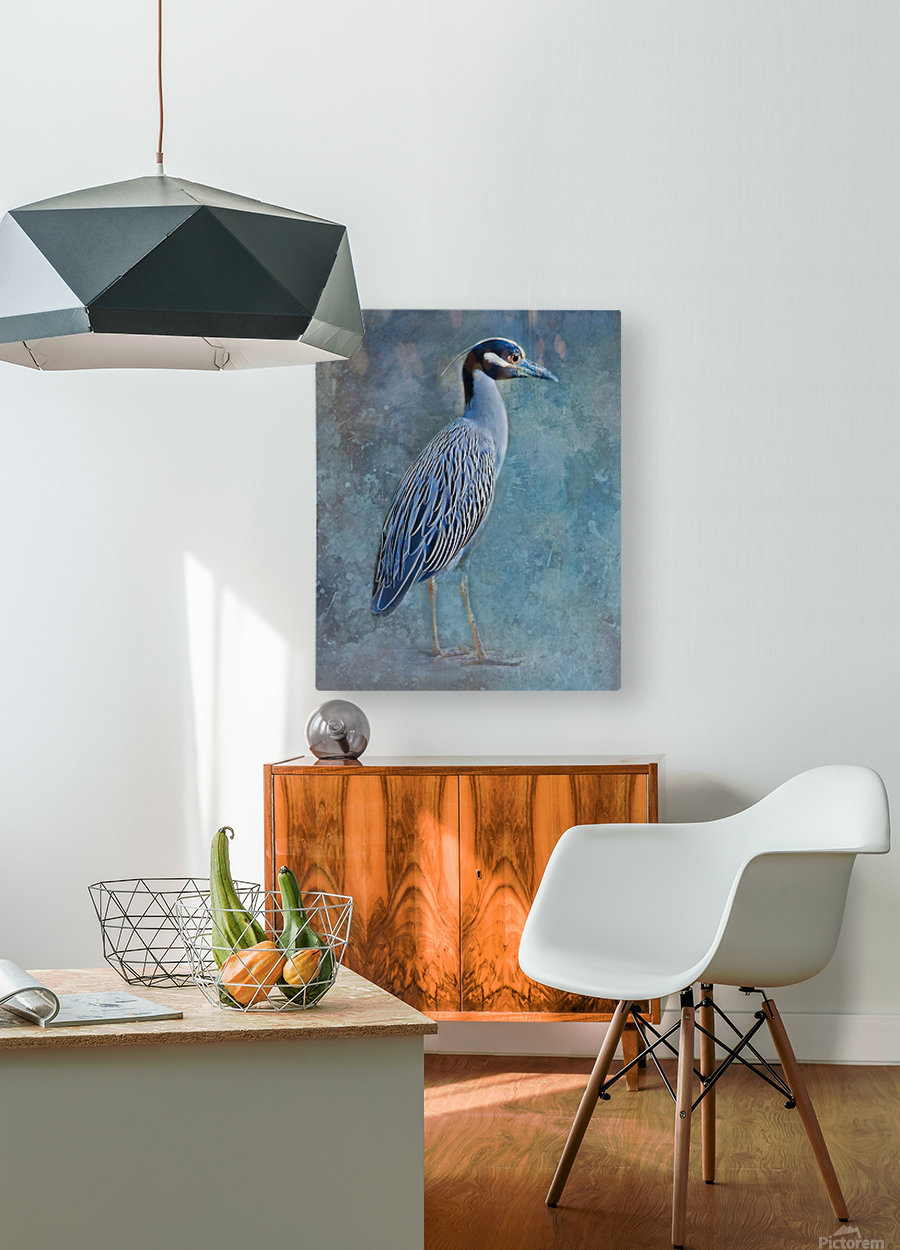 Night Heron Blues  HD Metal print with Floating Frame on Back