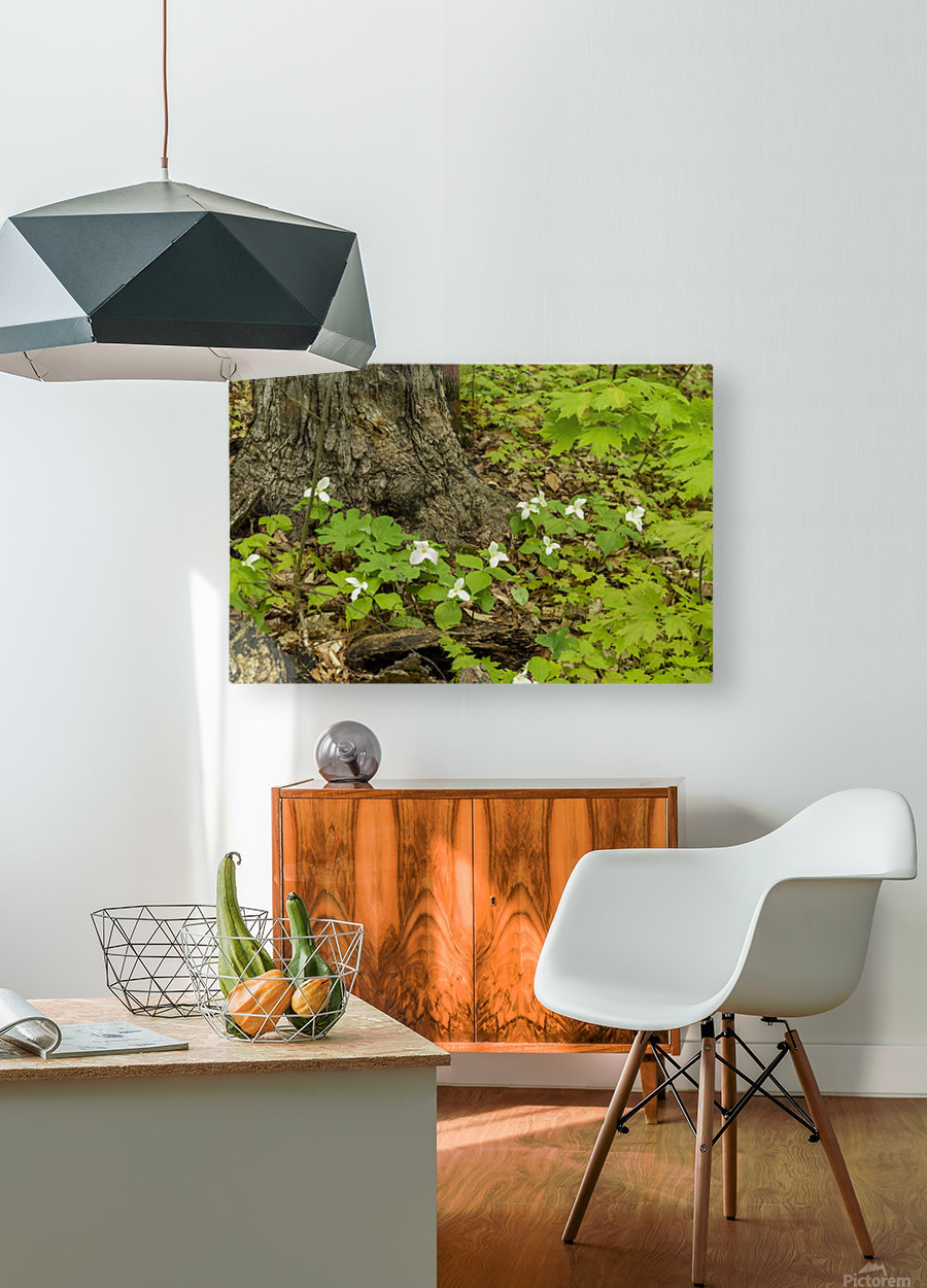 Trillium Woods 10  HD Metal print with Floating Frame on Back