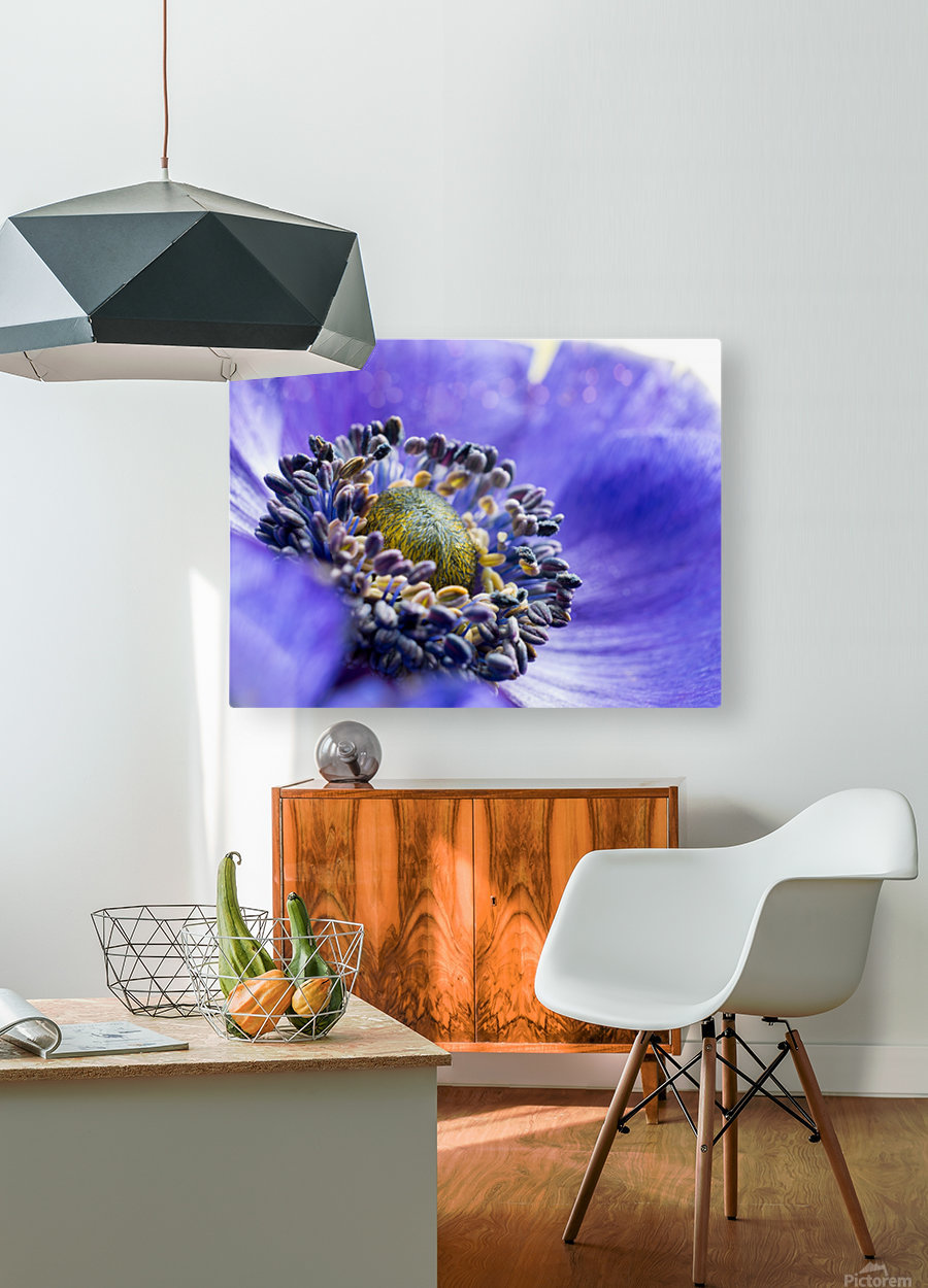Blue Flower Anemone Close-up Macro  HD Metal print with Floating Frame on Back