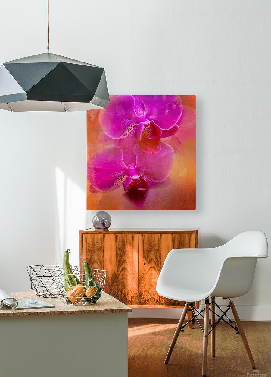 Colorful Phalaenopsis  HD Metal print with Floating Frame on Back
