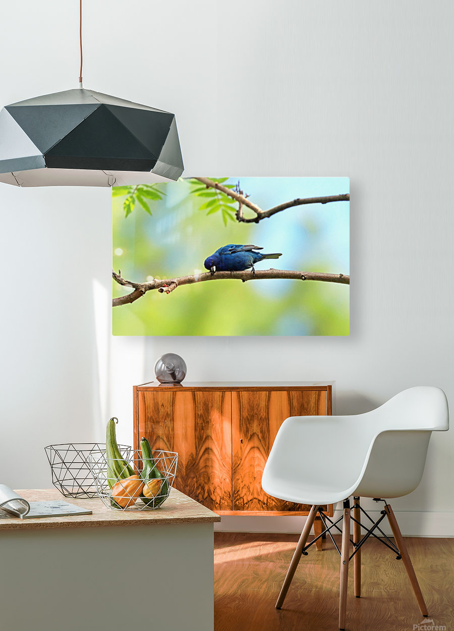 Laying Down On The Job  HD Metal print with Floating Frame on Back