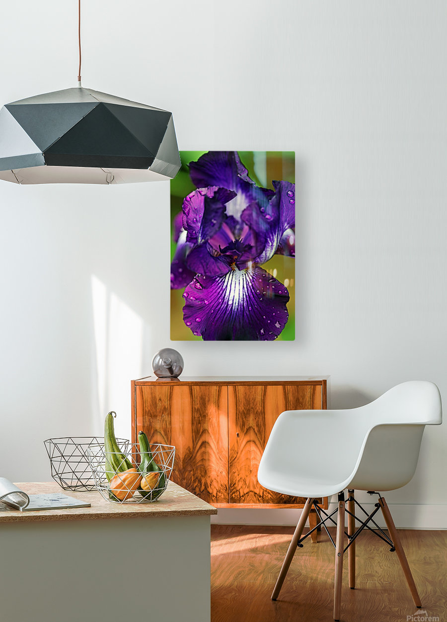 Purple With White Splash Iris  HD Metal print with Floating Frame on Back