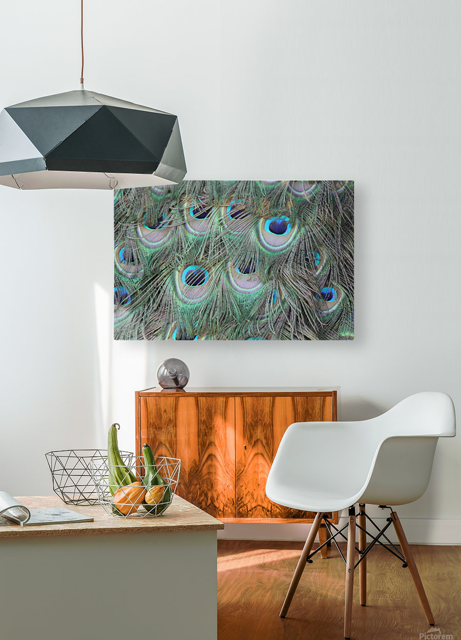peacock feather pattern plumage  HD Metal print with Floating Frame on Back