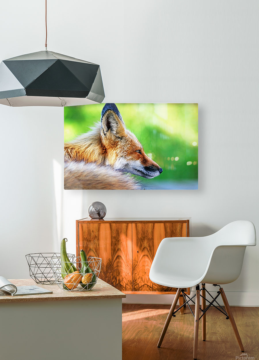 Red Fox Profile I  HD Metal print with Floating Frame on Back