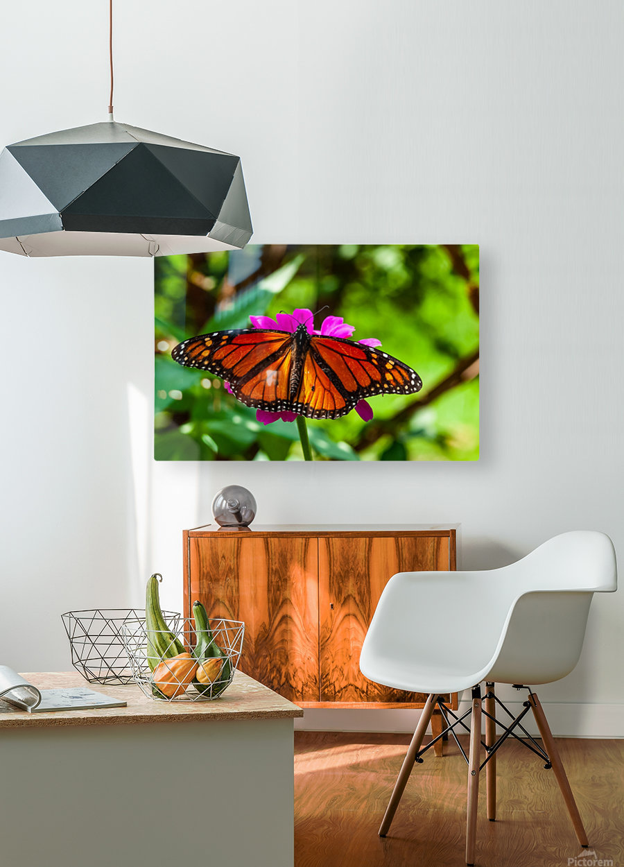 Color Clash  HD Metal print with Floating Frame on Back
