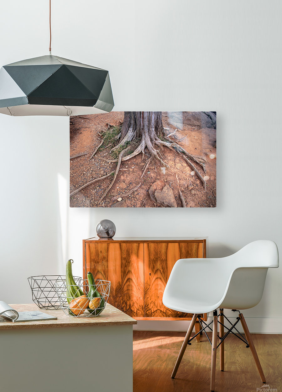 Gettysburg Tree Roots  HD Metal print with Floating Frame on Back