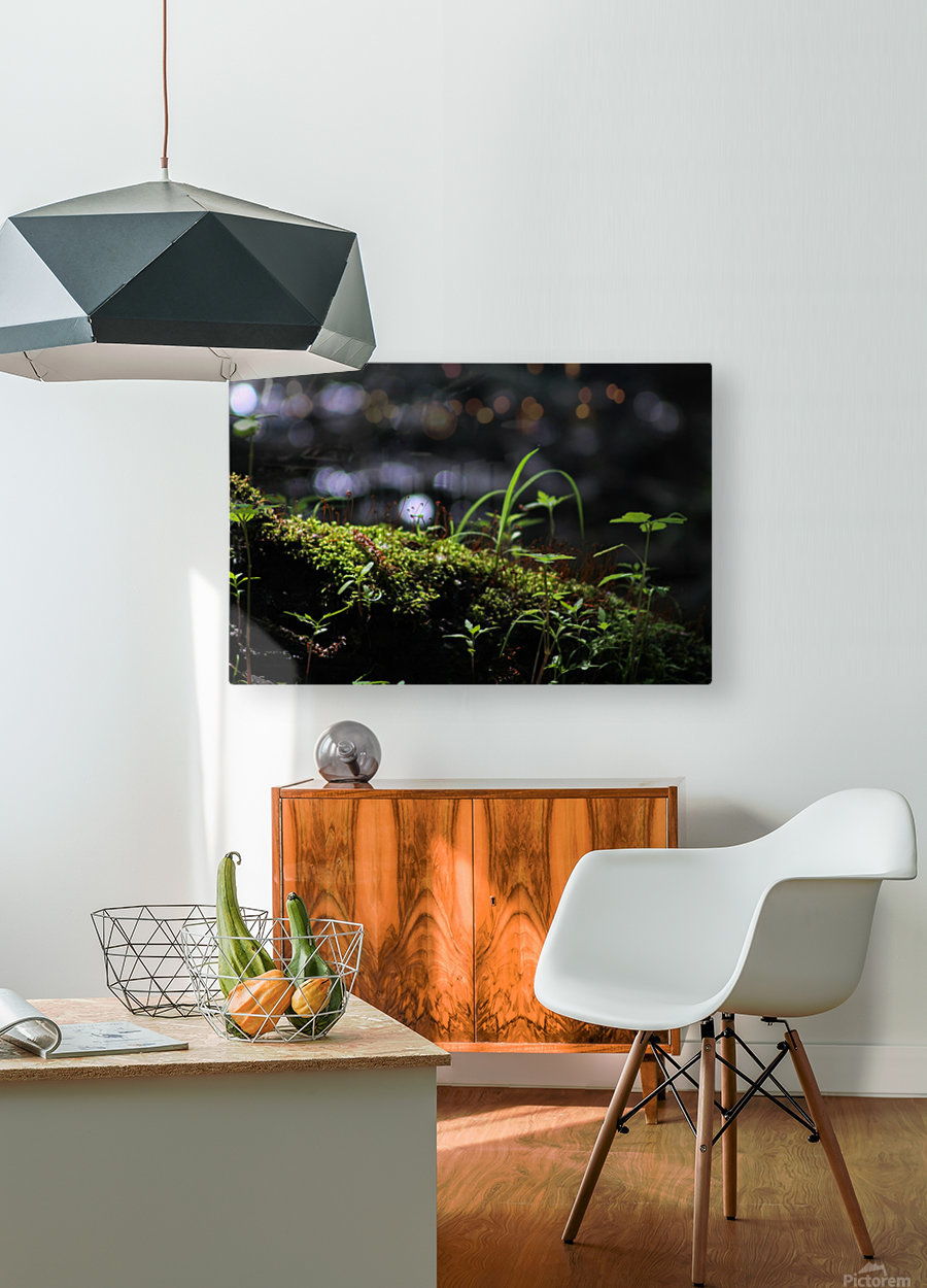 Beautiful Moss  HD Metal print with Floating Frame on Back