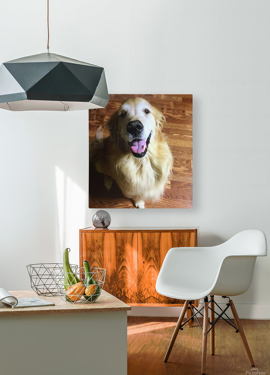 Happy Golden  HD Metal print with Floating Frame on Back