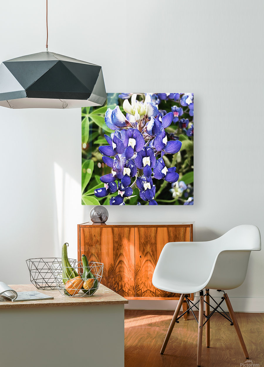 Bluebonnet  HD Metal print with Floating Frame on Back
