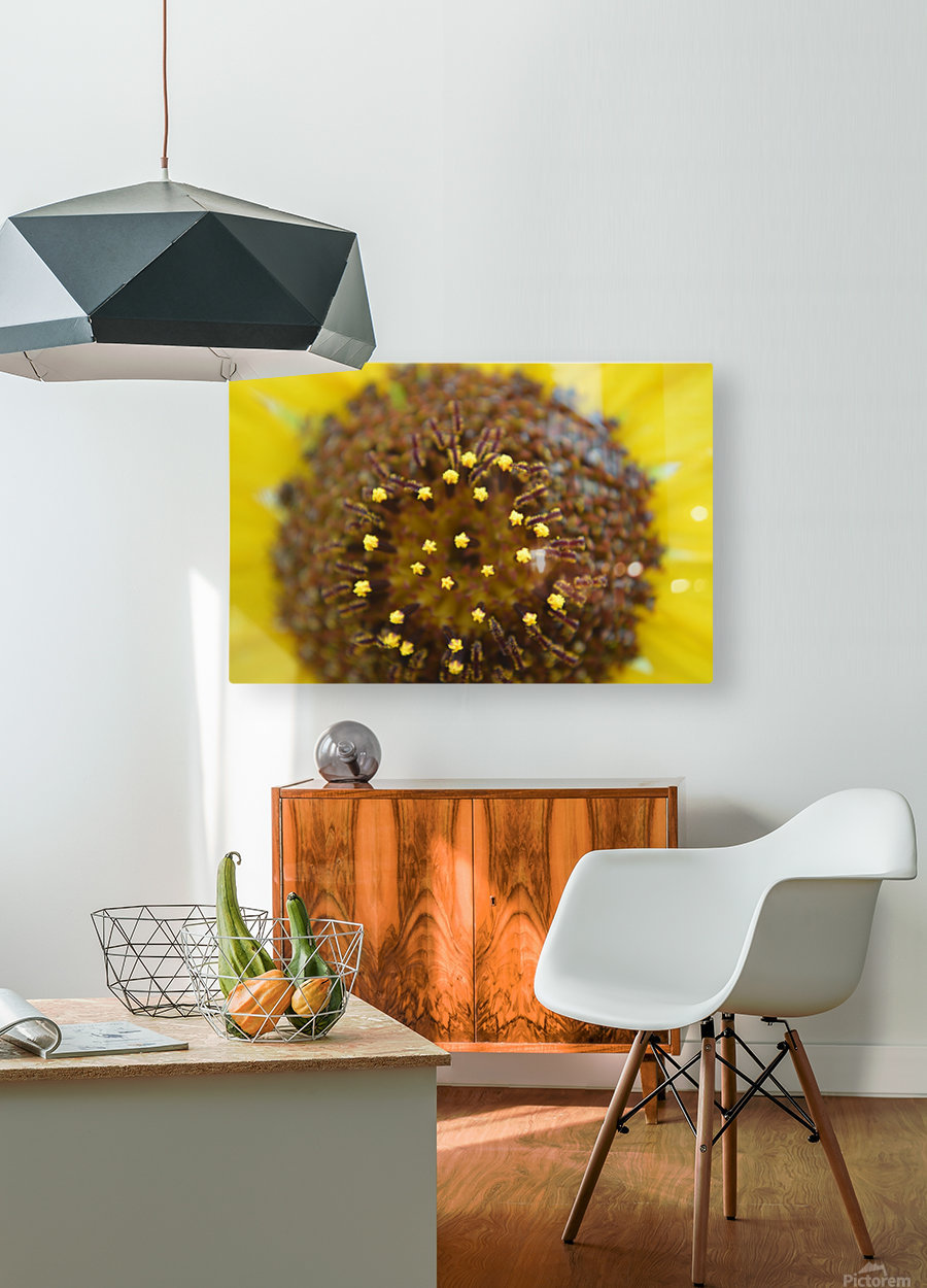 Sunflower Stars  HD Metal print with Floating Frame on Back