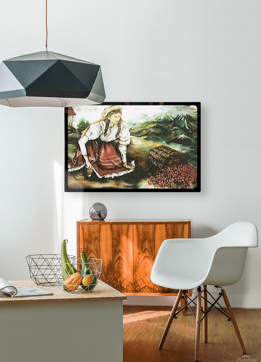 Harvesting Coffee Beans   HD Metal print with Floating Frame on Back