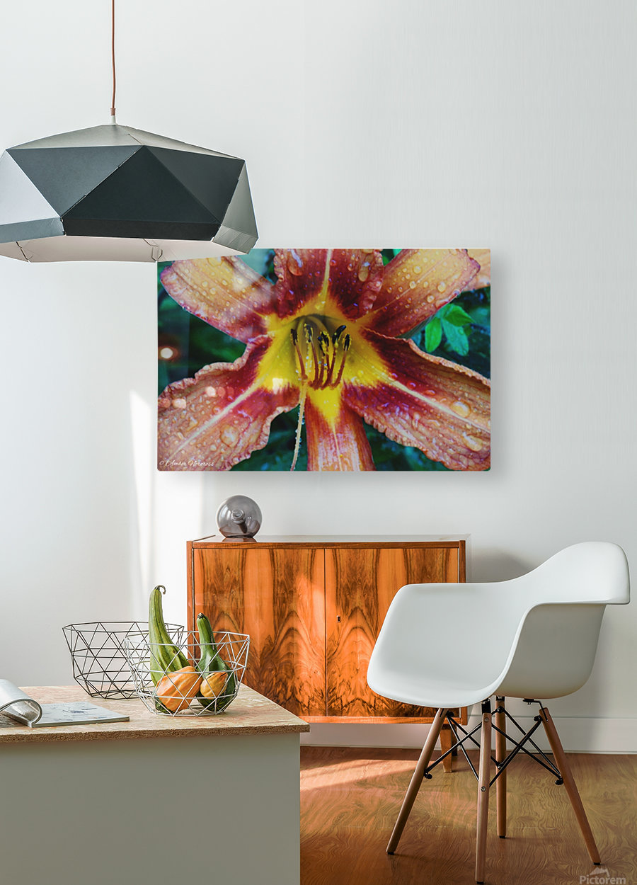 Eye of the tiger lily  HD Metal print with Floating Frame on Back